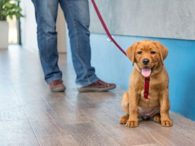 Is Your Waiting Room Prepped For Pet Interaction?